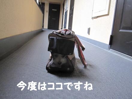b0193480_14532729.jpg