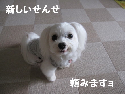 b0193480_1563645.jpg