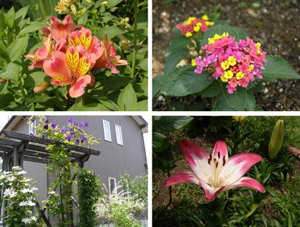TUE  12  JUNE  2012_a0099744_21575238.jpg