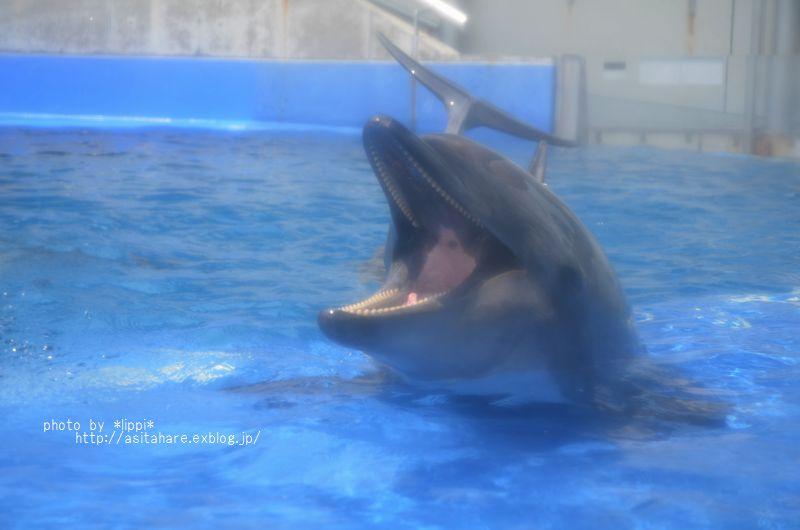 イルカの口のなか_b0024758_23591917.jpg
