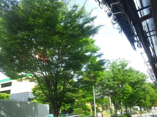 緑と自然と・・・・・・・Z1_a0163159_22551482.jpg