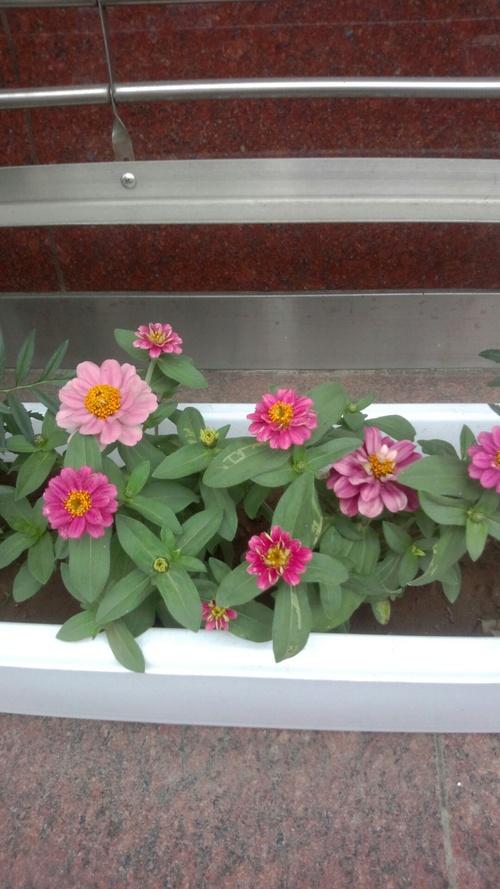 お花~♪_c0231772_17242980.jpg