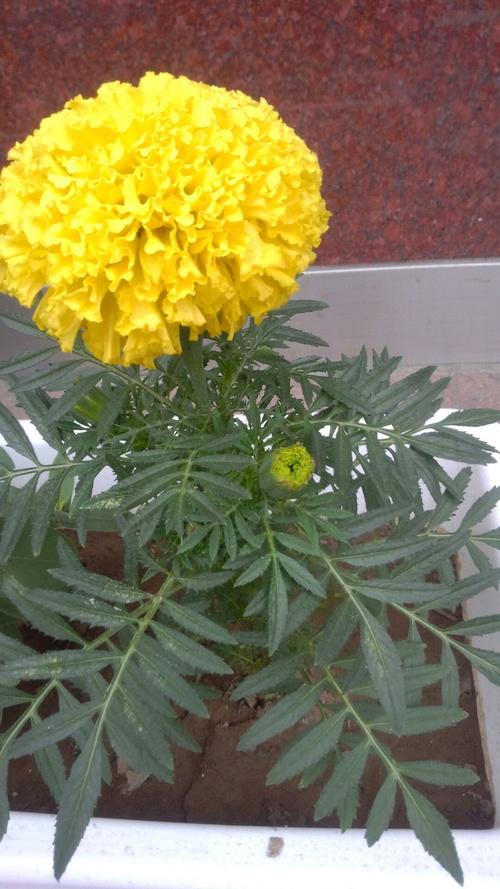 お花~♪_c0231772_1728465.jpg