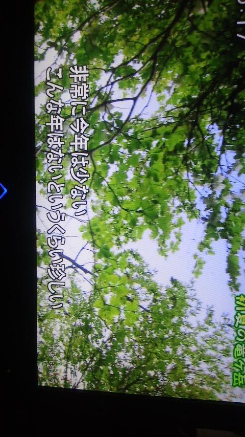 a0255577_1818202.jpg
