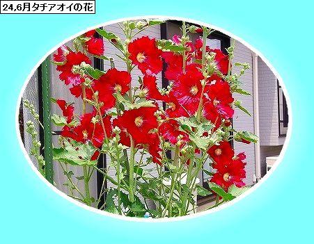 f0059487_14332859.jpg