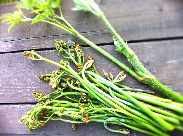 山菜と春のセミ&限定プランのお知らせ_c0048494_18154413.jpg
