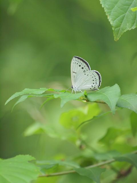 草間で蝶 2_e0074308_23575496.jpg