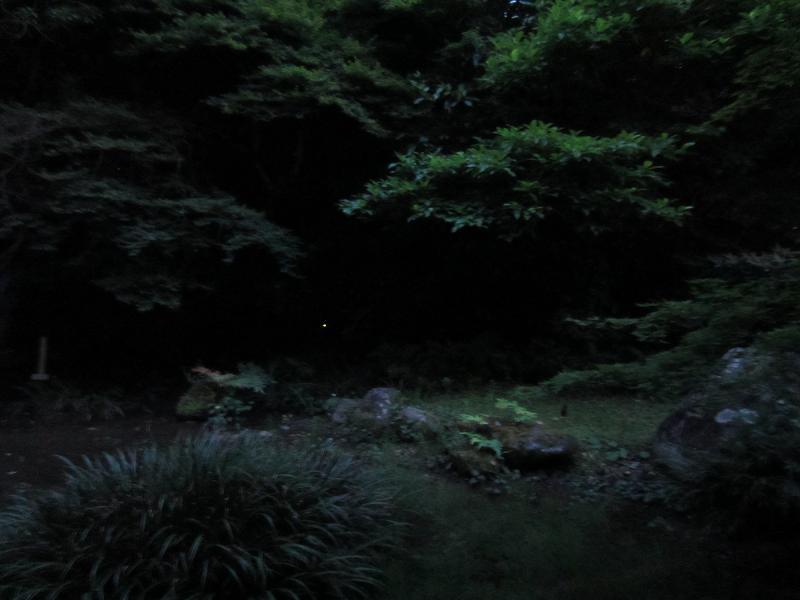熊本水遺産めぐり~釣耕園の蛍~_b0228113_018147.jpg