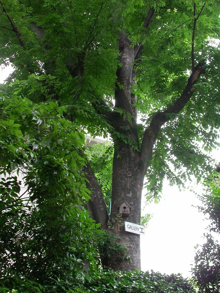 森のおくりもの_a0089420_10455534.jpg