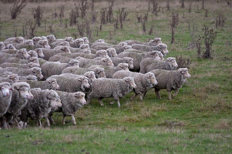 羊たちは、僕たちか?_f0137354_20504593.jpg