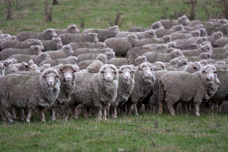 羊たちは、僕たちか?_f0137354_20511557.jpg