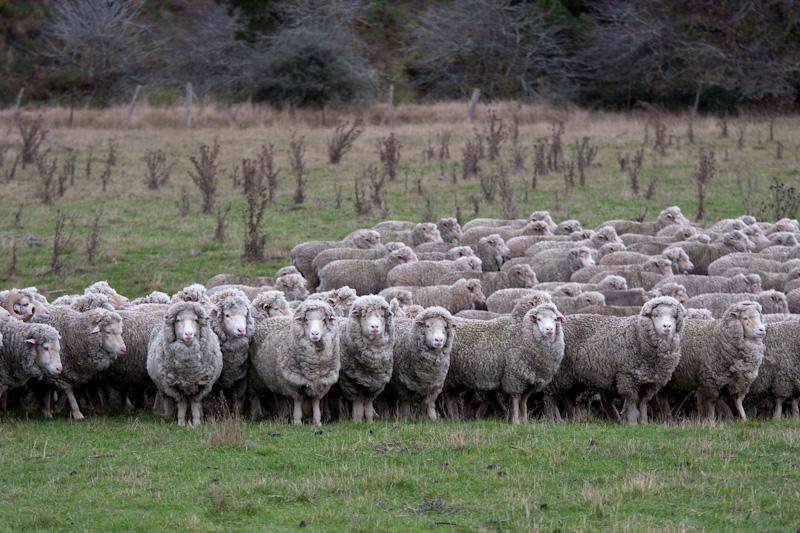 羊たちは、僕たちか?_f0137354_20514884.jpg