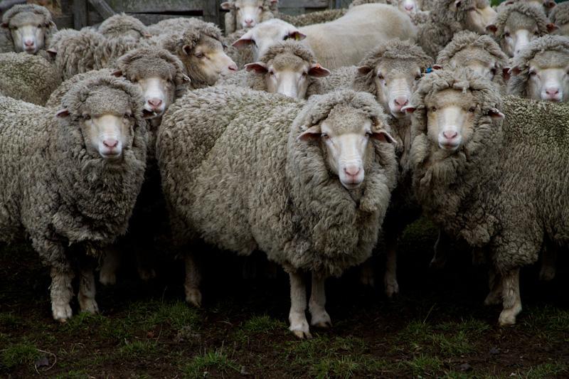 羊たちは、僕たちか?_f0137354_2052476.jpg