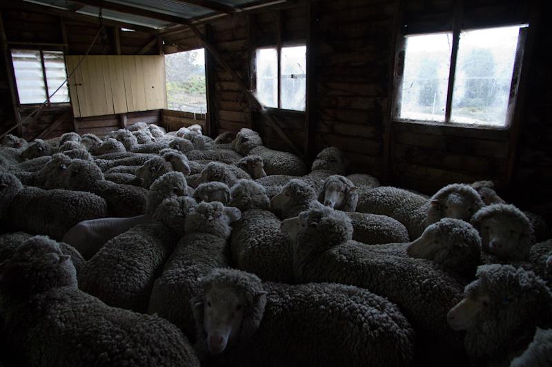羊たちは、僕たちか?_f0137354_20533049.jpg
