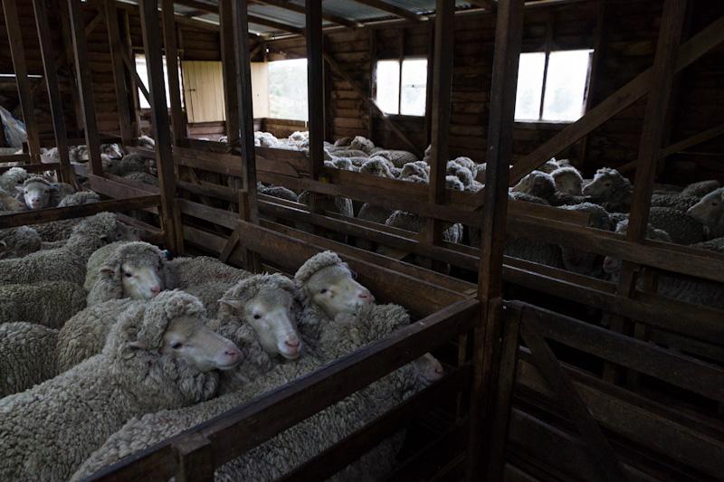 羊たちは、僕たちか?_f0137354_20535247.jpg