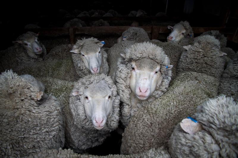 羊たちは、僕たちか?_f0137354_2053943.jpg