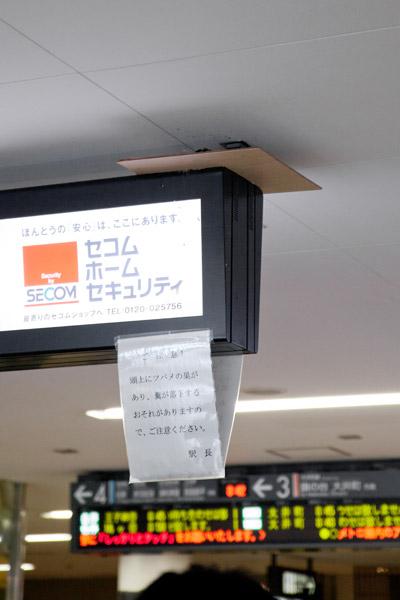 2012/06/13 大岡山駅のツバメ_b0171364_10115685.jpg