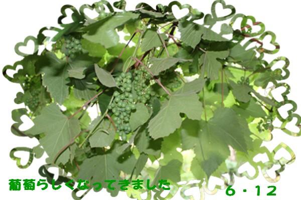 f0003174_10531362.jpg