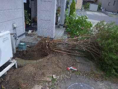 今年は庭 <その1>_c0072486_10251538.jpg