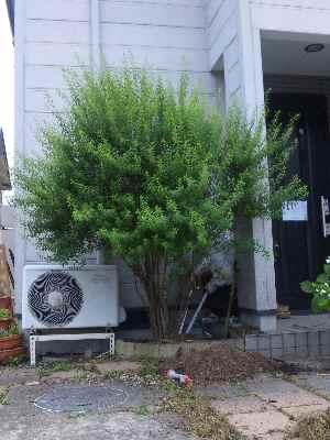 今年は庭 <その1>_c0072486_102630100.jpg