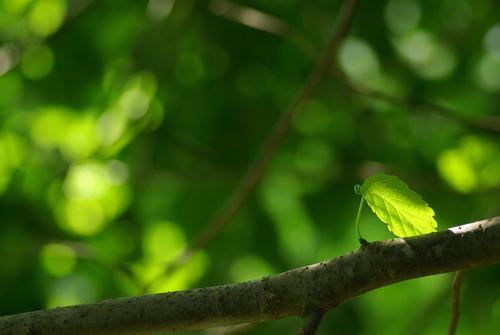 新緑の贅沢_f0155808_100446.jpg
