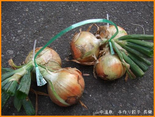 玉ねぎを収穫してまーすの巻_a0041925_9103793.jpg