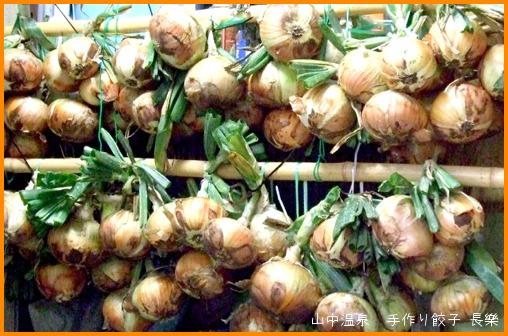 玉ねぎを収穫してまーすの巻_a0041925_9105028.jpg