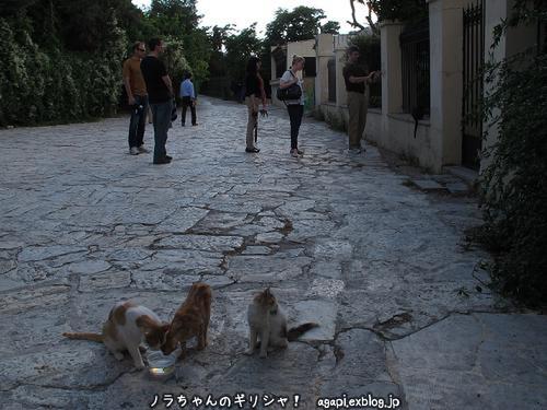 ギリシャ猫好きの野良犬とフランスのマルセイユの不法外国人の写真_f0037264_23542565.jpg