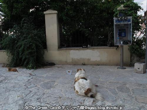 ギリシャ猫好きの野良犬とフランスのマルセイユの不法外国人の写真_f0037264_23543336.jpg