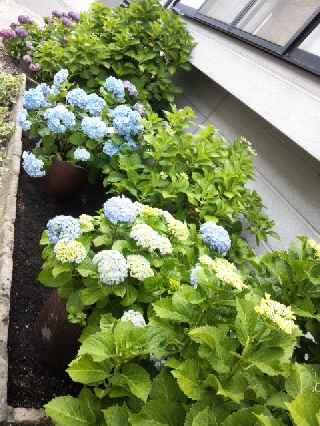 今年は庭 <その2>_c0072486_1445855.jpg