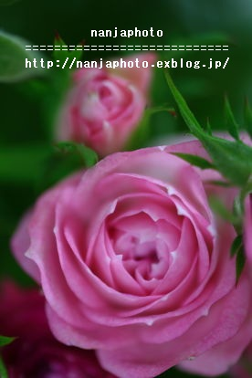 e0268999_16402431.jpg