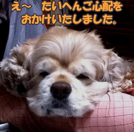 b0067012_050052.jpg