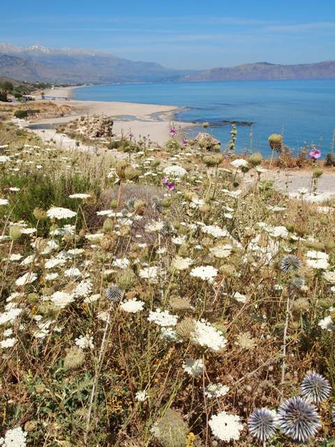 地中海のある場所で..._c0213220_6355791.jpg