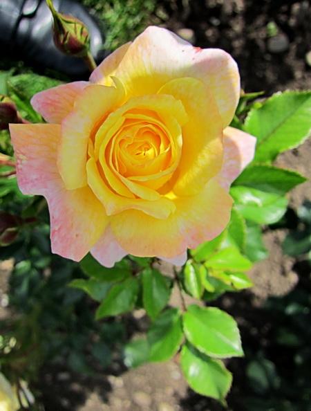 薔薇園_a0086828_4222457.jpg