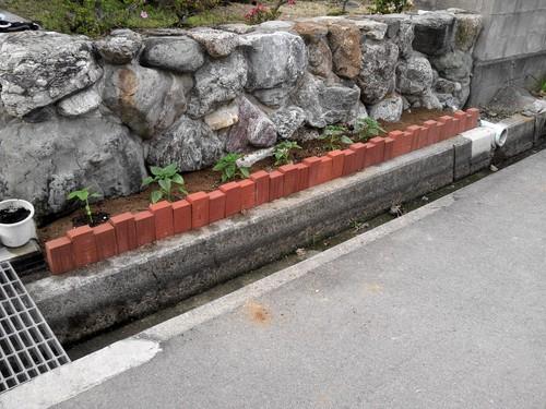 花壇づくり_a0167735_1137218.jpg