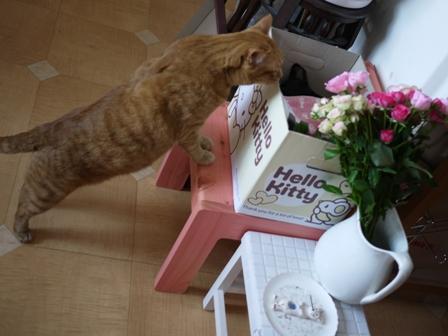 お誕生日猫 しぇる9歳編。_a0143140_23452151.jpg