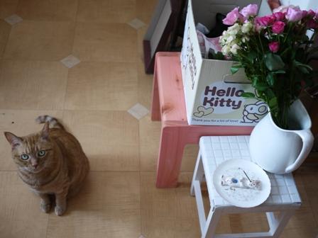 お誕生日猫 しぇる9歳編。_a0143140_23461797.jpg