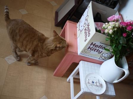 お誕生日猫 しぇる9歳編。_a0143140_235479.jpg