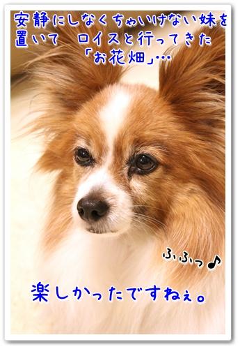 d0013149_2350941.jpg