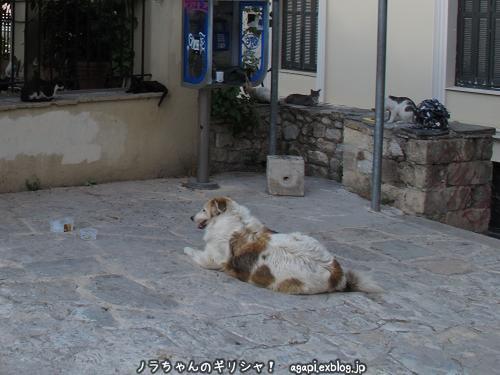 ギリシャ猫好きの野良犬とフランスのマルセイユの不法外国人の写真_f0037264_011443.jpg