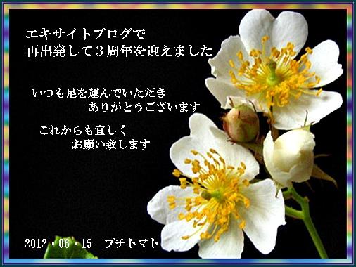 a0126676_1837971.jpg