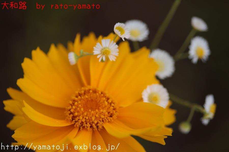 f0236776_1961575.jpg