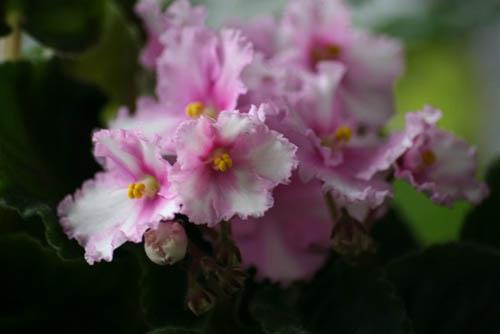 我が家に咲いている花_f0030085_20145421.jpg