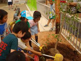 植樹しました_c0212598_1646181.jpg