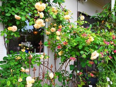 2012年茨城のお庭 その15_c0167112_1819177.jpg
