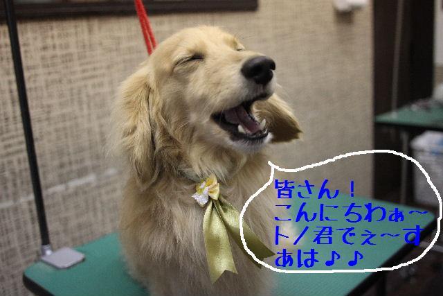 b0130018_18333978.jpg