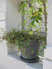 植栽がはいると素敵度アップ~☆_e0128446_1585349.jpg