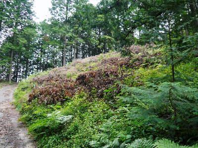 原木しいたけ クヌギの伐採から仮伏せまで_a0254656_13564932.jpg