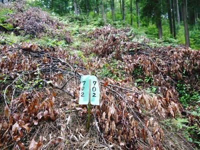 原木しいたけ クヌギの伐採から仮伏せまで_a0254656_15432945.jpg