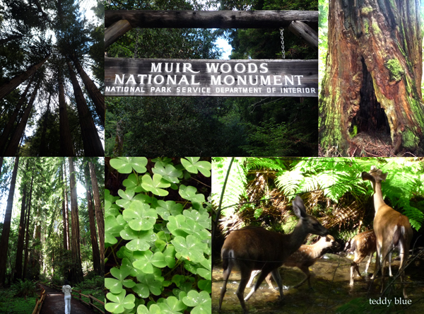 muir woods national monument  ミュアウッズの森_e0253364_16312368.jpg